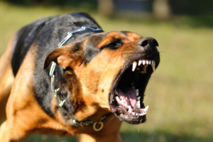best-california-dog-bite-animal-attack-injury-accident-attorney-david-laurence-altman-california-dog-bite-animal-attack-injury-accident-lawyer